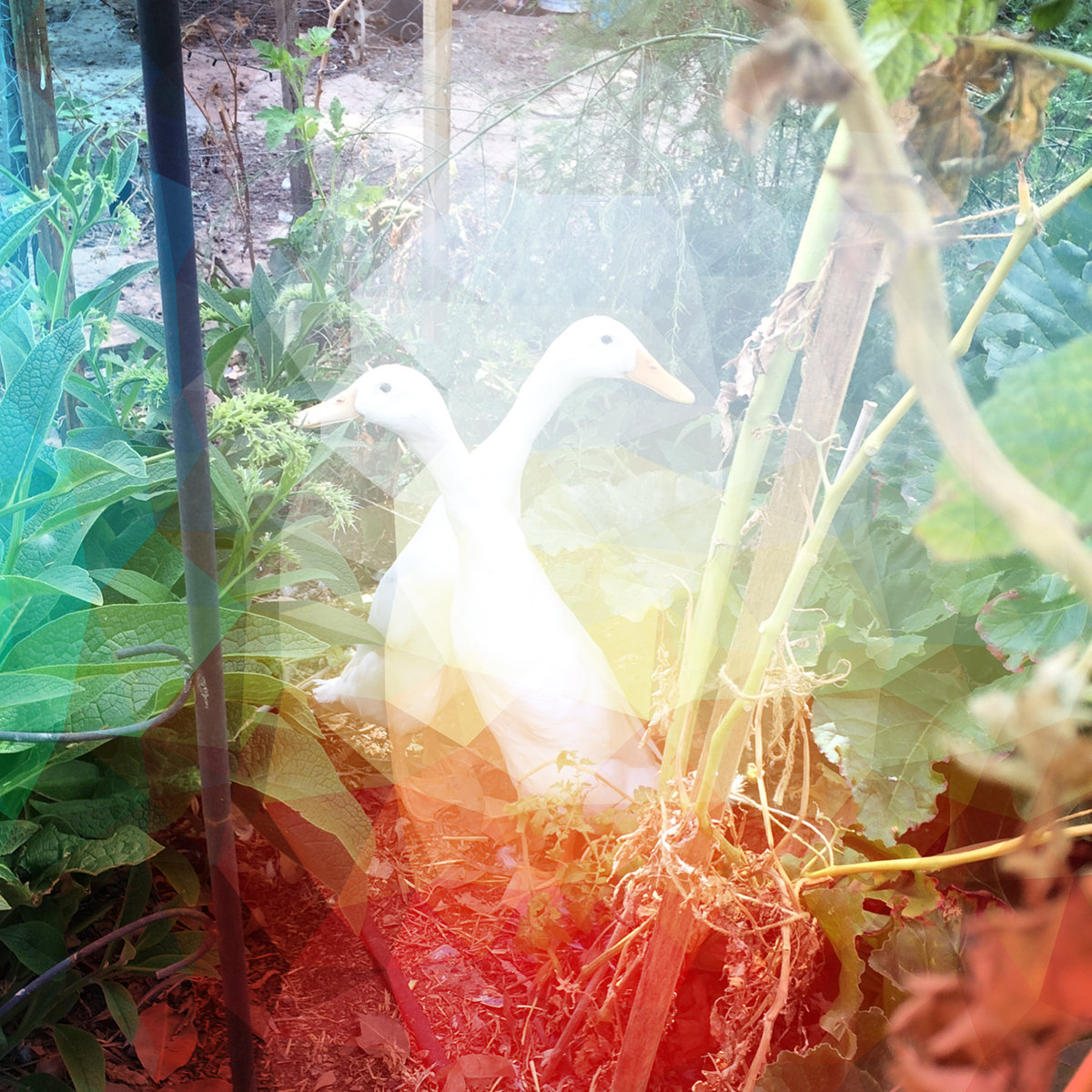 """1.1 Immermann - """"""""Plovers"""""""" [Recorded, Mixed & Mastered (JP)]"""