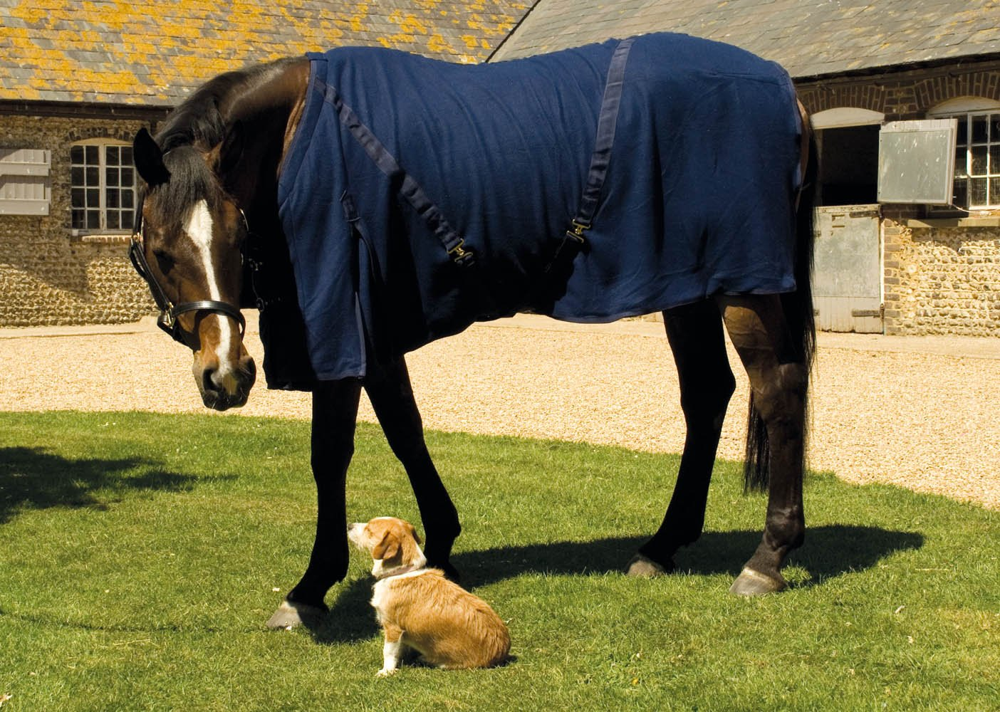 Harlequin fleece rug - £36.50 including 1 logo embroideryAvailable in Navy onlyAvailable in sizes 5'0 up to 7'0