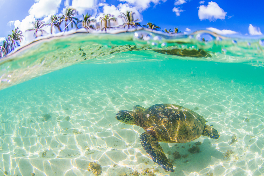 TURTLE-TASTIC - WHETHER ITS A SCHOOL BAKE STALL, A TROPICAL BEACH PARTY OR YOUR NEXT BIRTHDAY - FIND OUT HOW YOU COULD TURN YOUR EVENT INTO A LIFE CHANGING GIFT FOR ONE OF THE OCEANS MOST VULNERABLE CREATURES