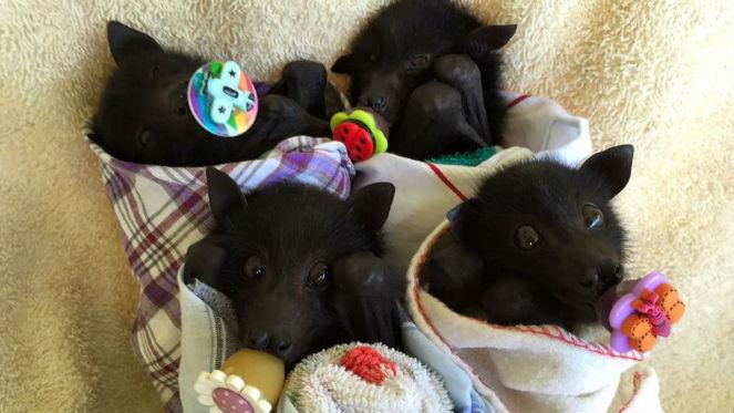Blankets for Baby Bats.jpg