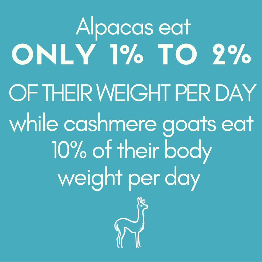 Alpacas eat ONLY 1% TO 2% OF THEIR WEIGHT PER DAY while cashmere goats eat 10% of their body weight per day