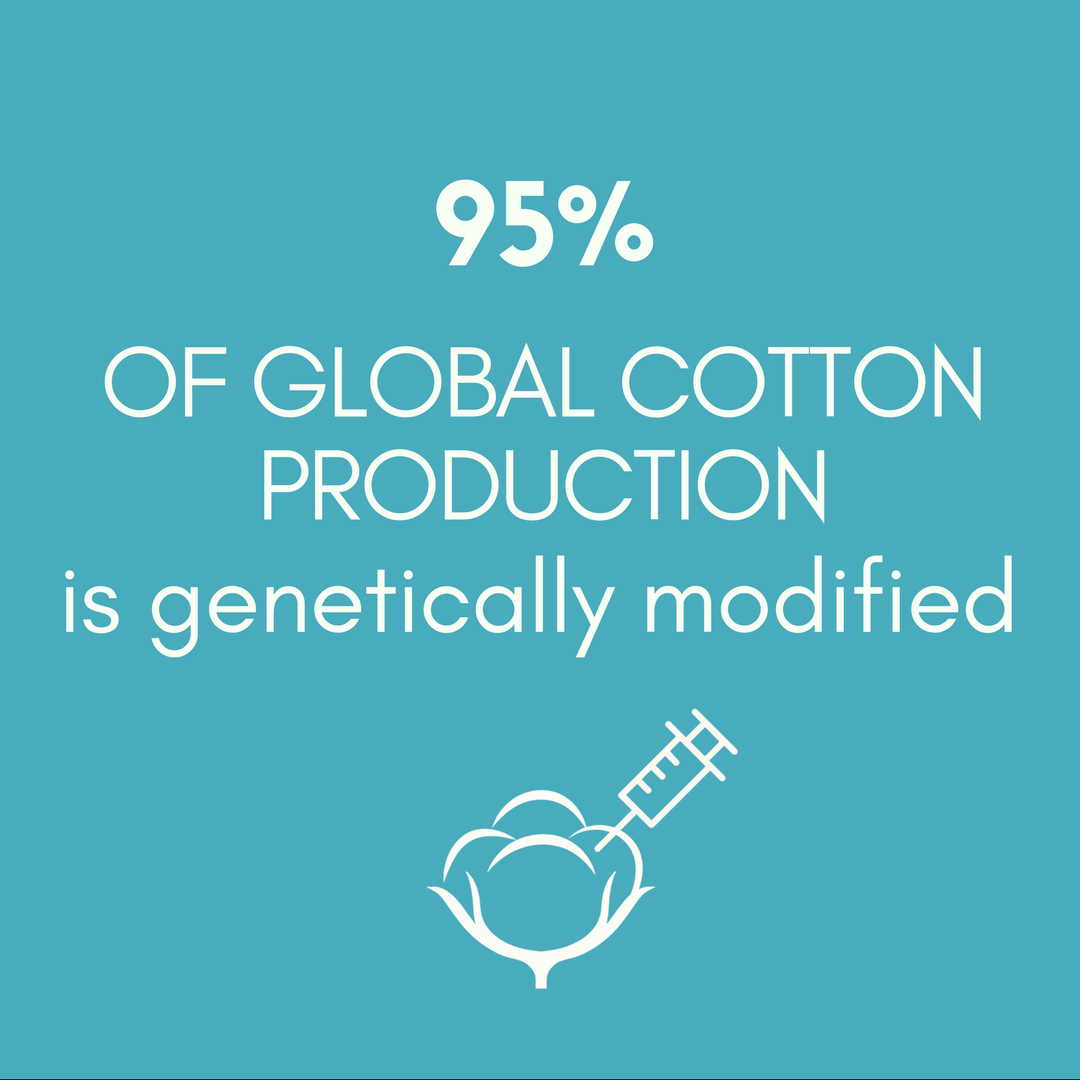 95% OF GLOBAL COTTON PRODUCTION is genetically modified