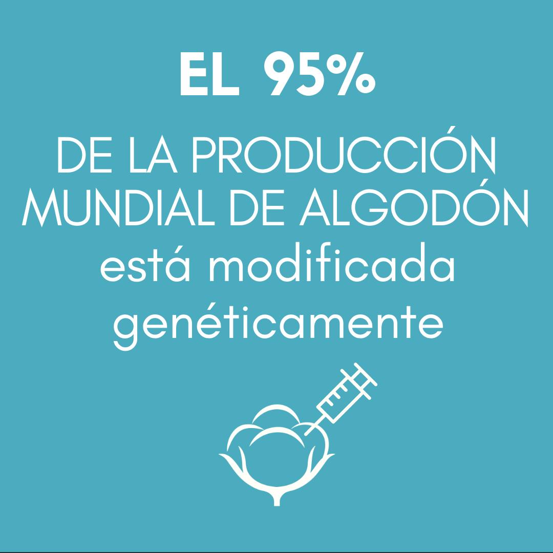 >El 95 % DE LA PRODUCCIÓN MUNDIAL DE ALGODÓN está genéticamente modificada.