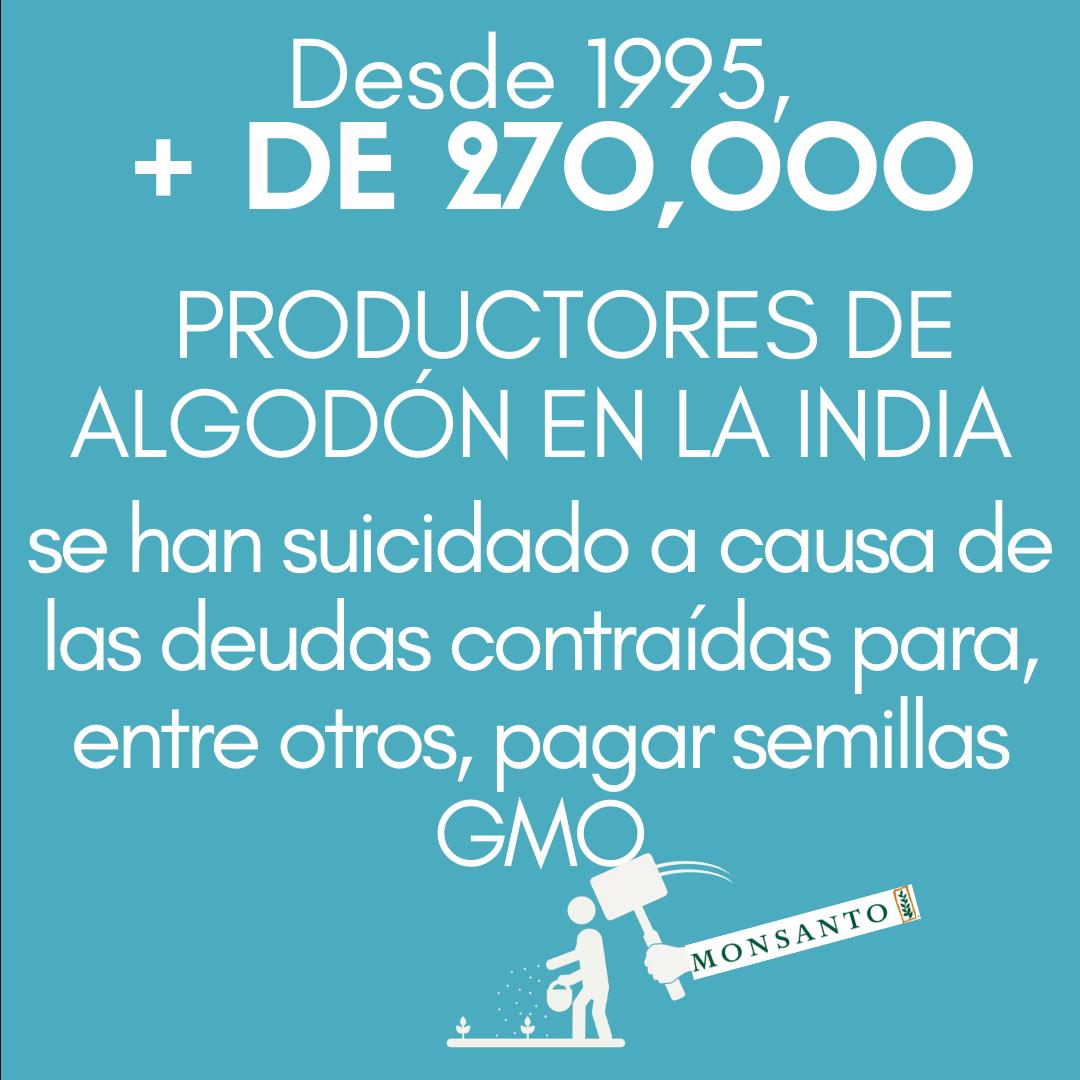 >Desde 1995, más de 270 000 AGRICULTORES DE ALGODÓN EN INDIA se han suicidado a causa de las deudas contraídas para, entre otros, pagar semillas genéticamente modificadas.