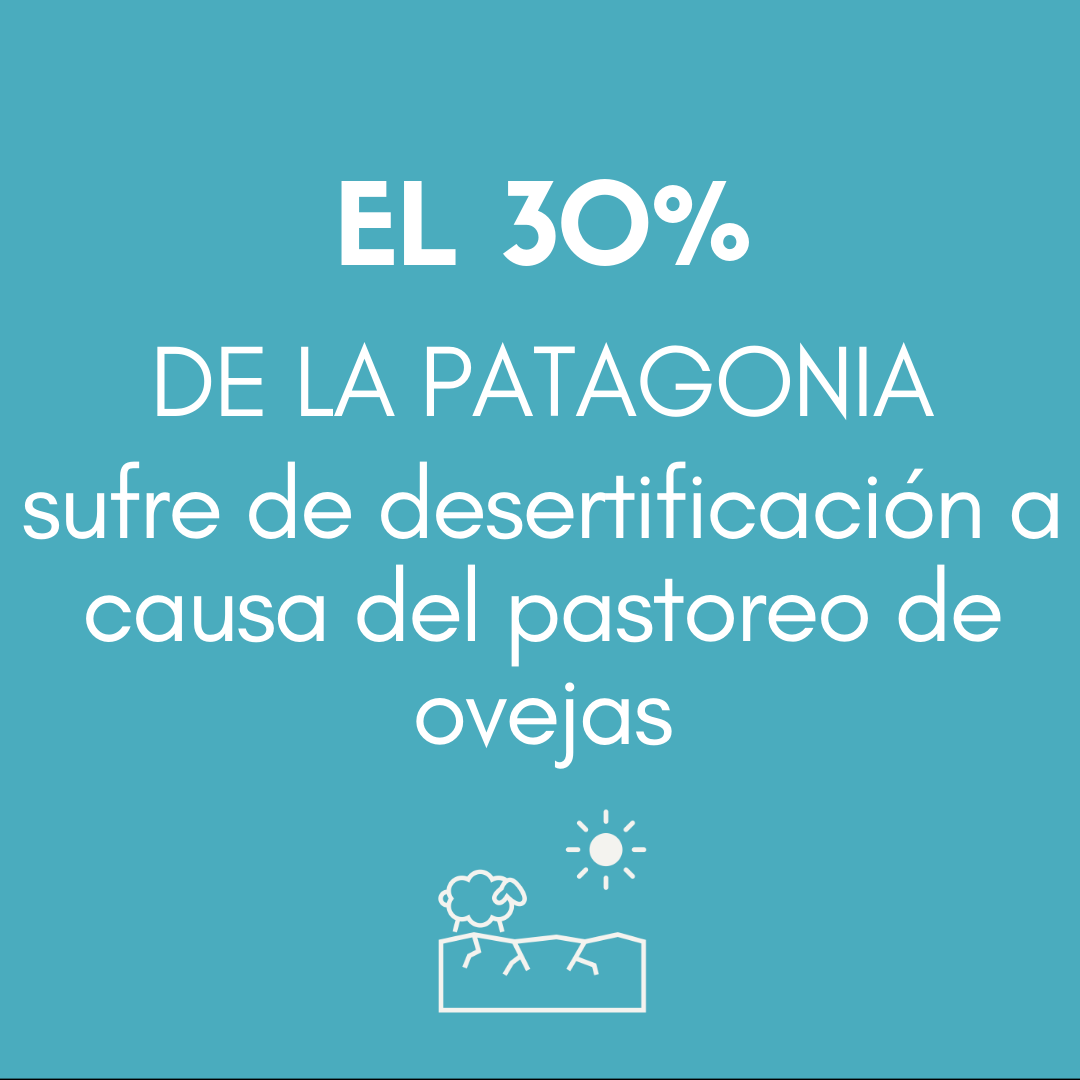 > El 30 % DE LA PATAGONIA sufre de desertificación a causa del pastoreo de ovejas.