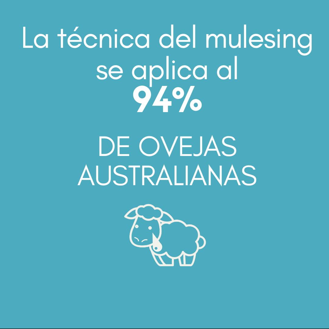> La técnica del mulesing se aplica al 94 % DE OVEJAS AUSTRALIANAS.