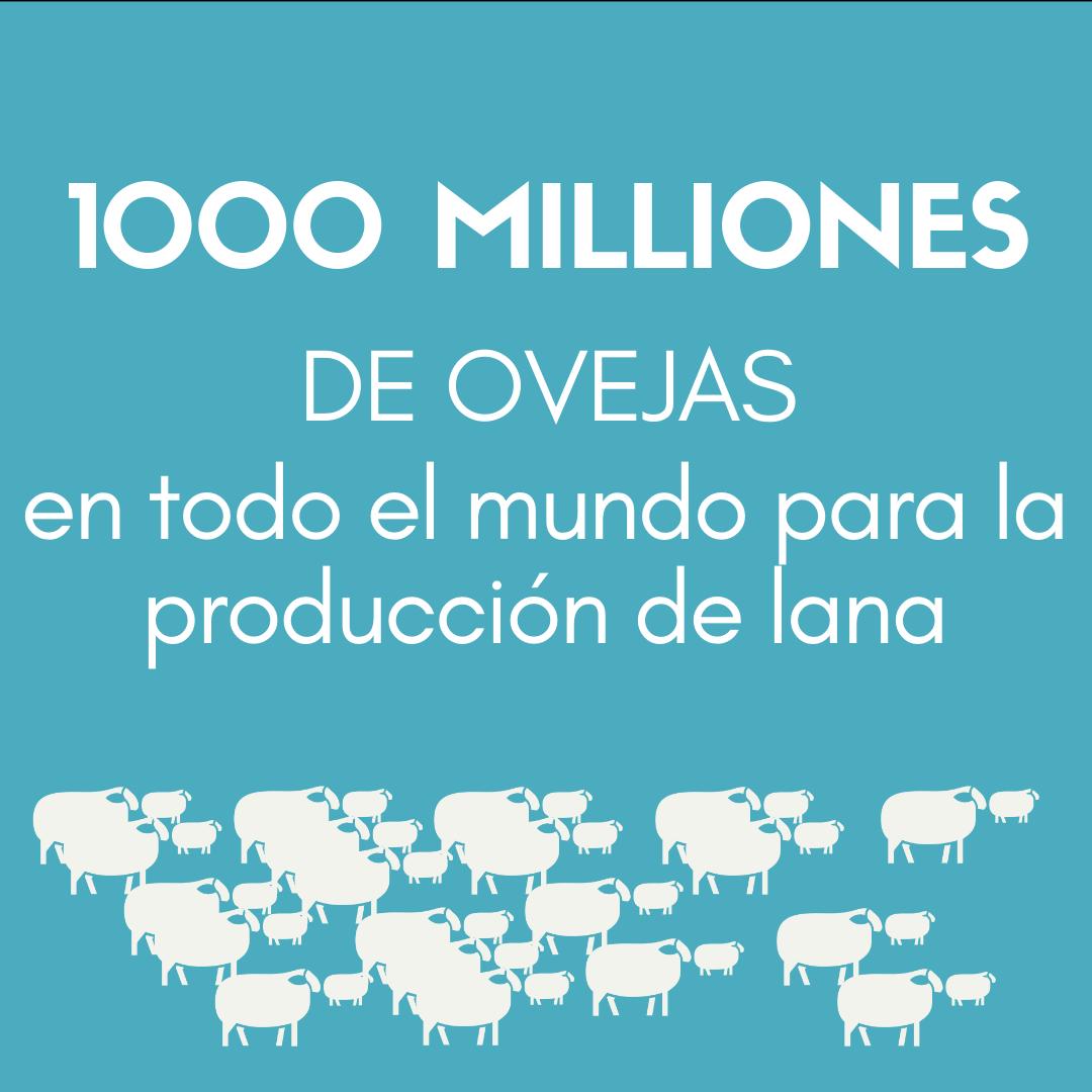 > Se crían MIL MILLONES DE OVEJAS en todo el mundo para la producción de lana.