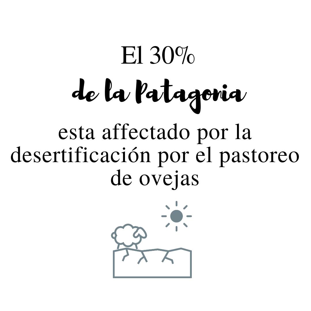 30% patagonia.png