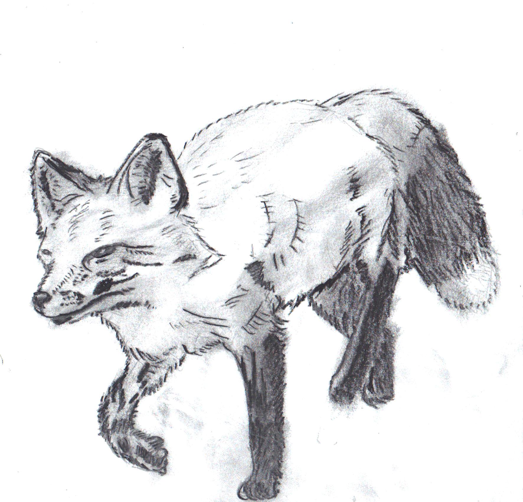 charcoal fox.jpg