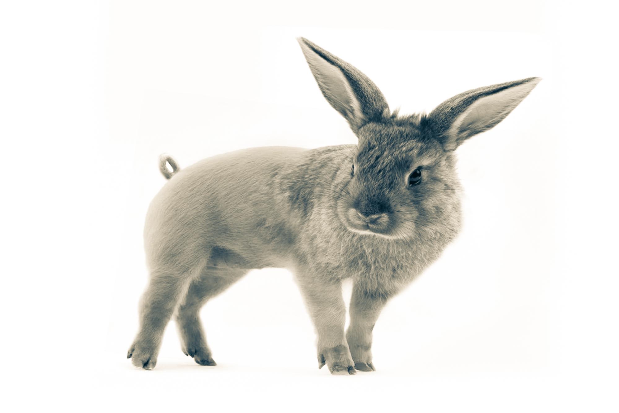 Pabbit.B&W.2x3.2000px.jpg