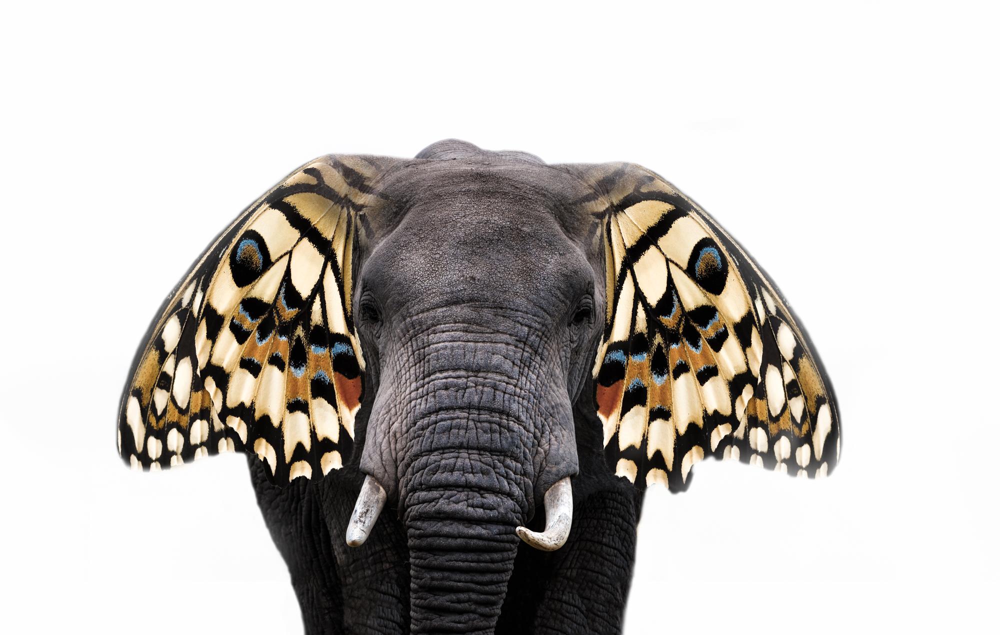 Butterfly Wings.2x3.2000px.jpg