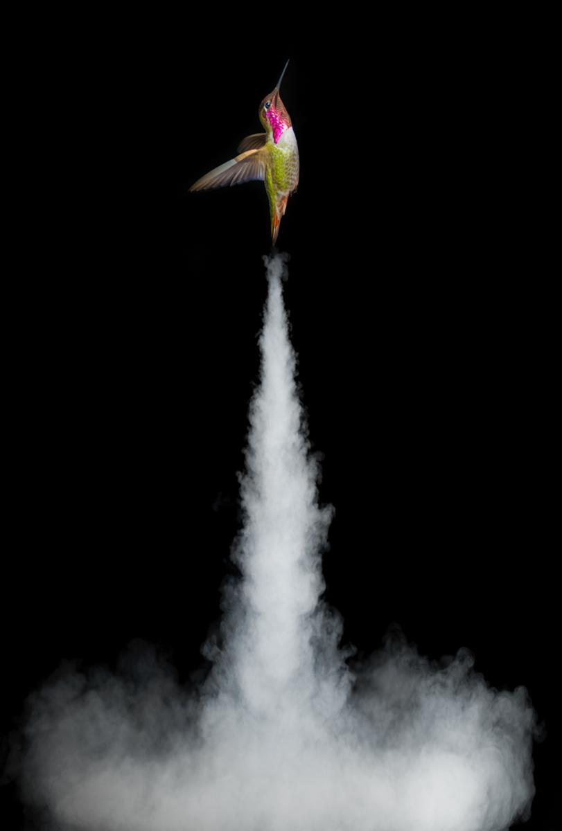 Rocketbird.12.5x18.5.1200px.jpg