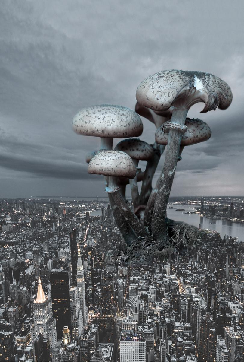 Mushroom City.12.5x18.5.1200px.jpg