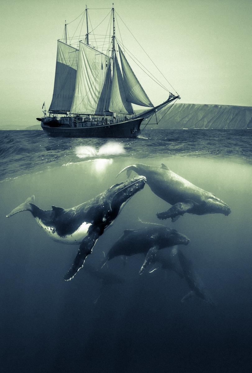 Ocean Dance.12.5x18.5.1200px.jpg