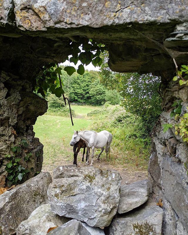 Friends spotted through the castle window. #horses #colt