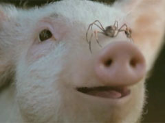 513. Wilbur from Charlotte's Web - Can't decide whether to bang or roast this plump lil suckling.