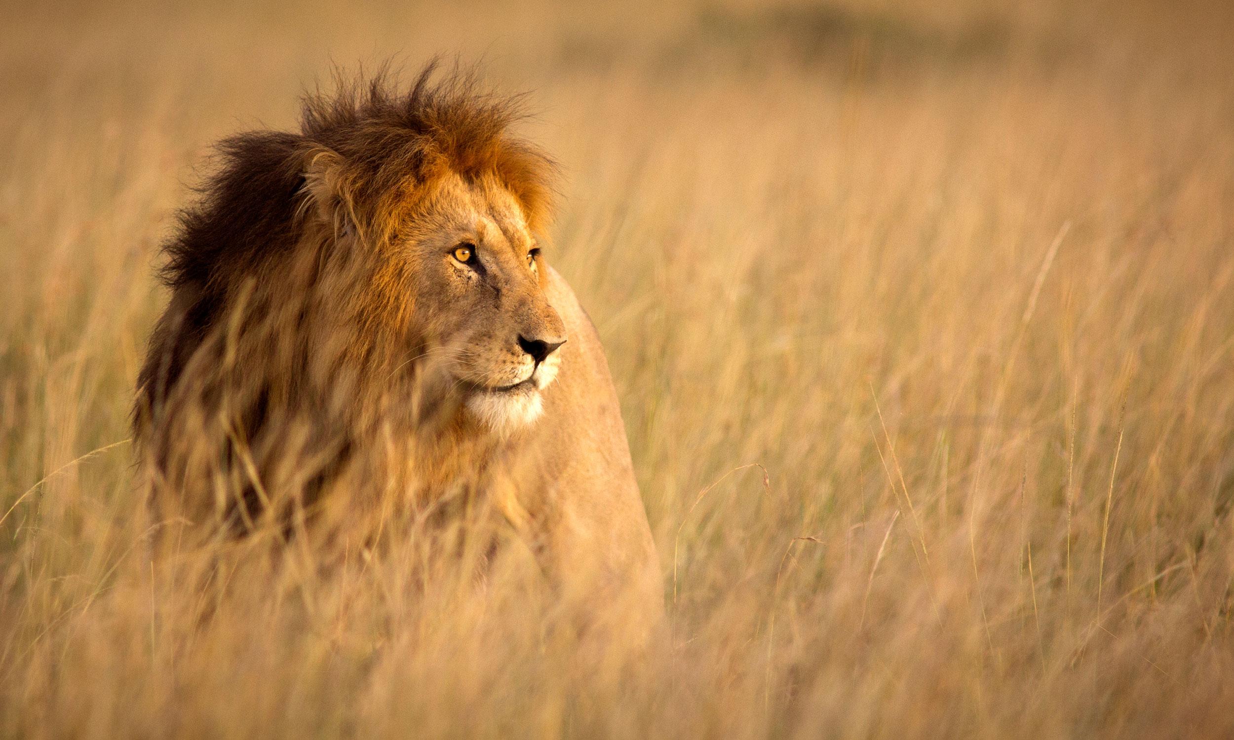 AFRICAN ADVENTURE -