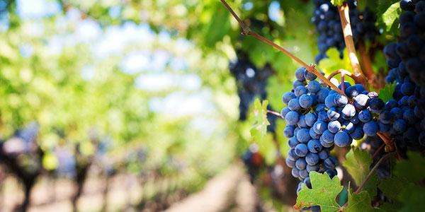 Bordeaux > Tuscany