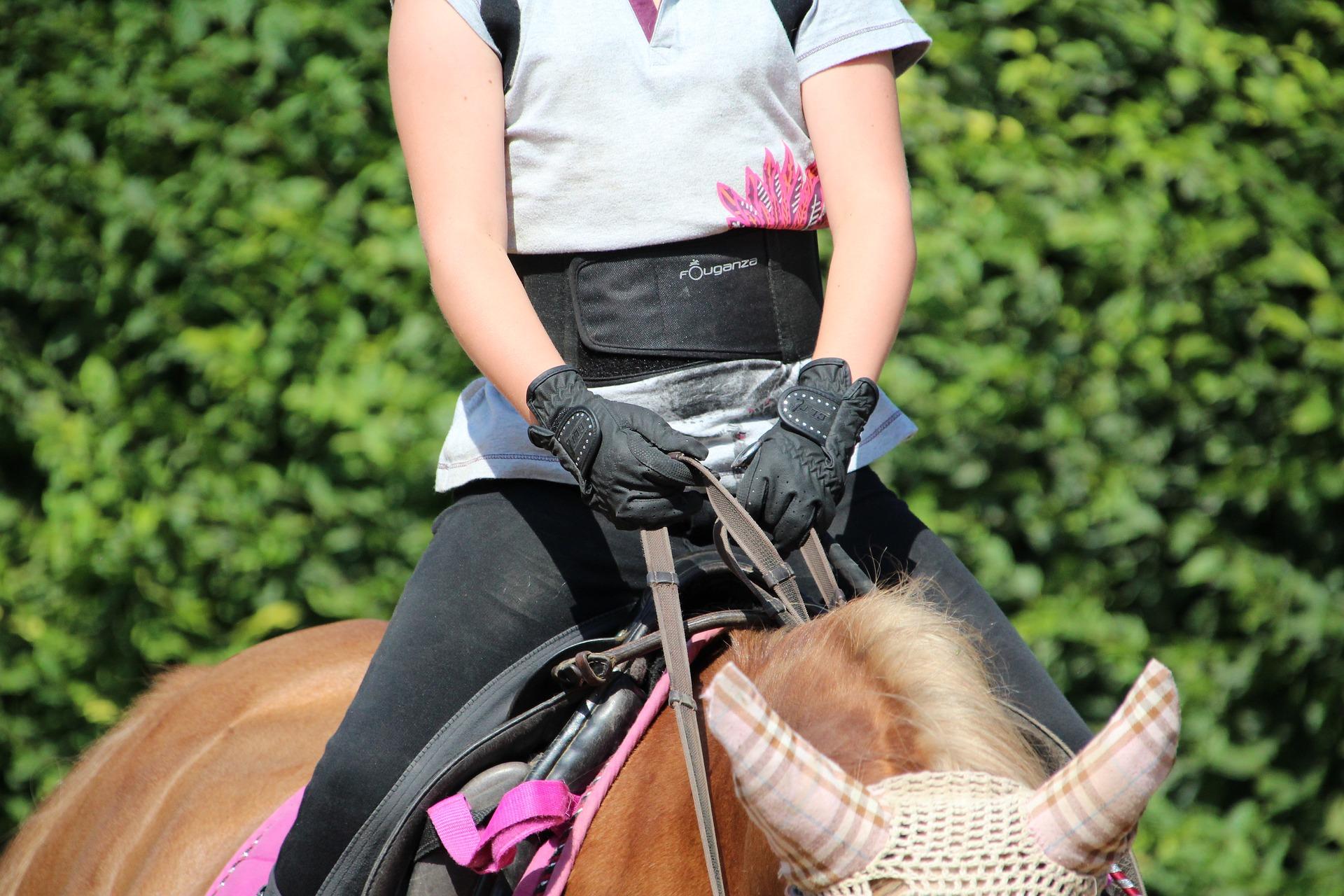 horse-2520736_1920.jpg