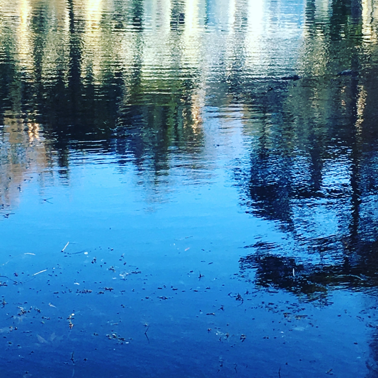 REFLECTIONS ON WATER, MORNING WALK IN ALEXANDRA PARK HASTINGS