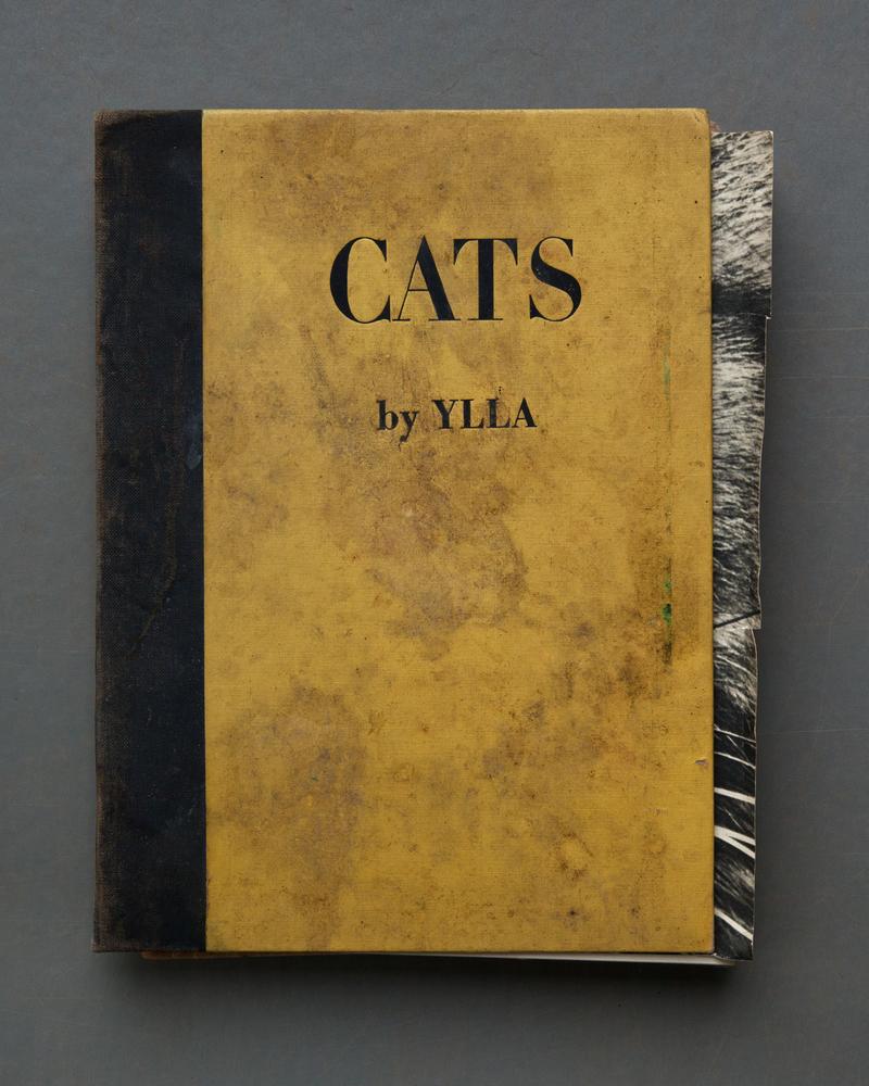 Cats, 2017