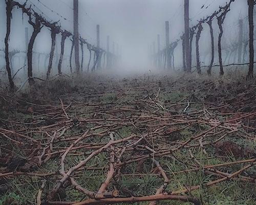 Vineyards.jpg
