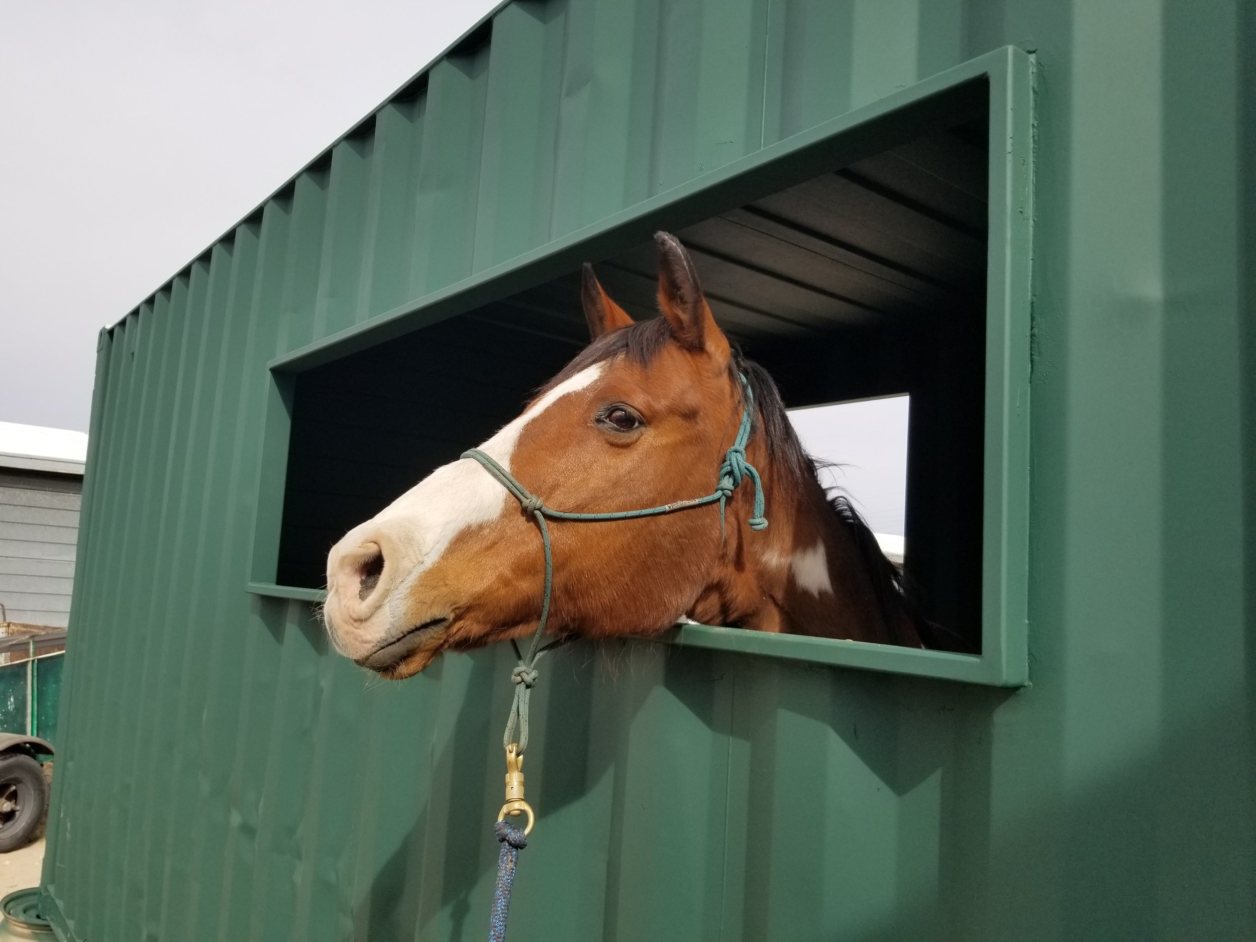 shipping container horse corral