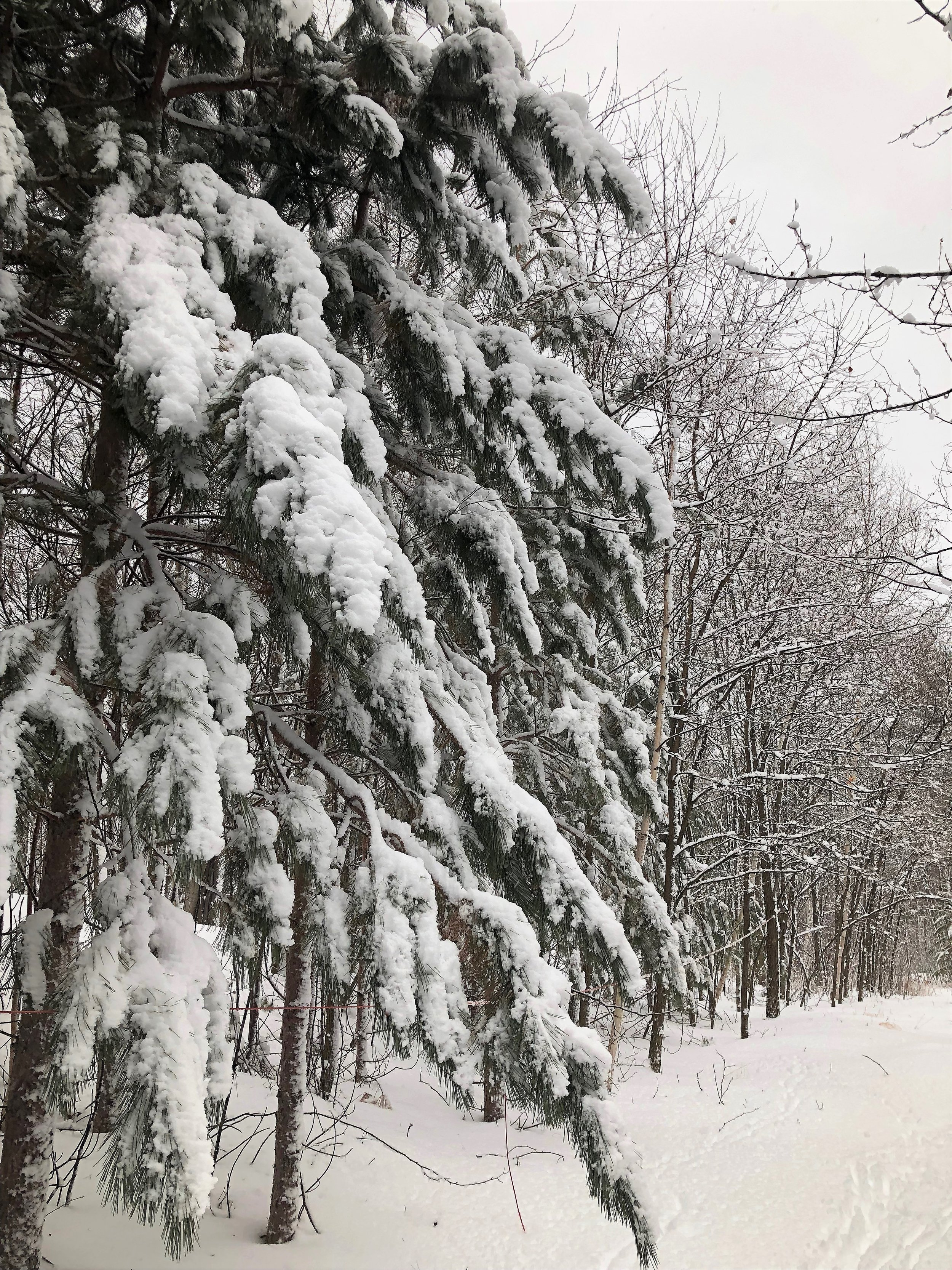 The winter woods around my tiny house in Marquette.