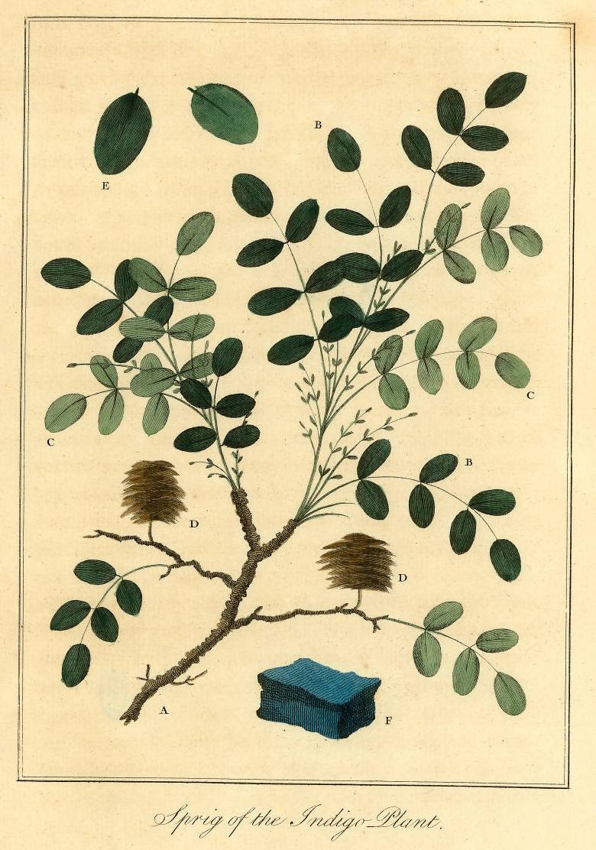 ©John Carter Brown Library, Box 1894, Brown University, Providence, R.I. 02912