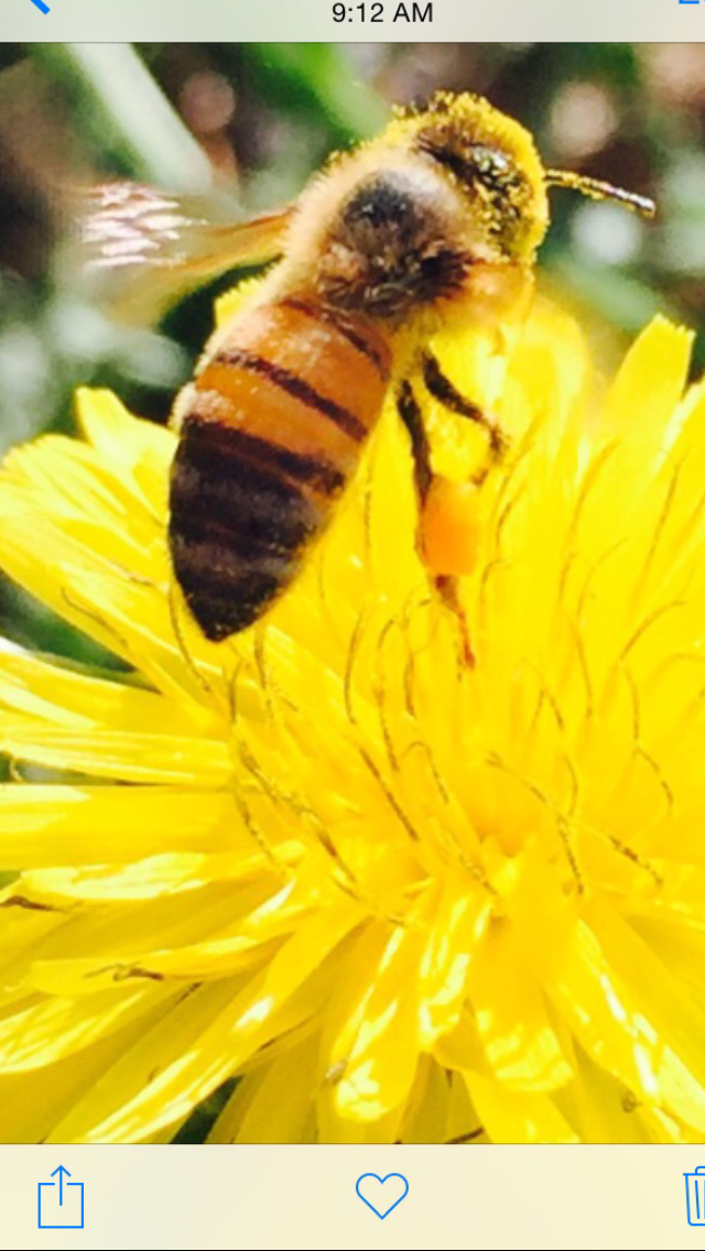 bee pictures 218.PNG