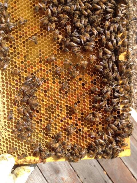 bees on frame 2.jpg