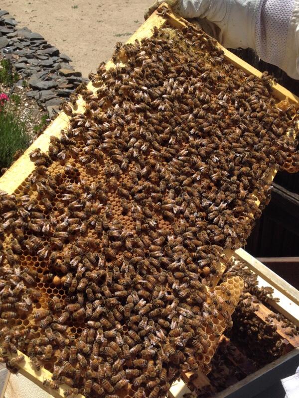 bees on frame 5.jpg