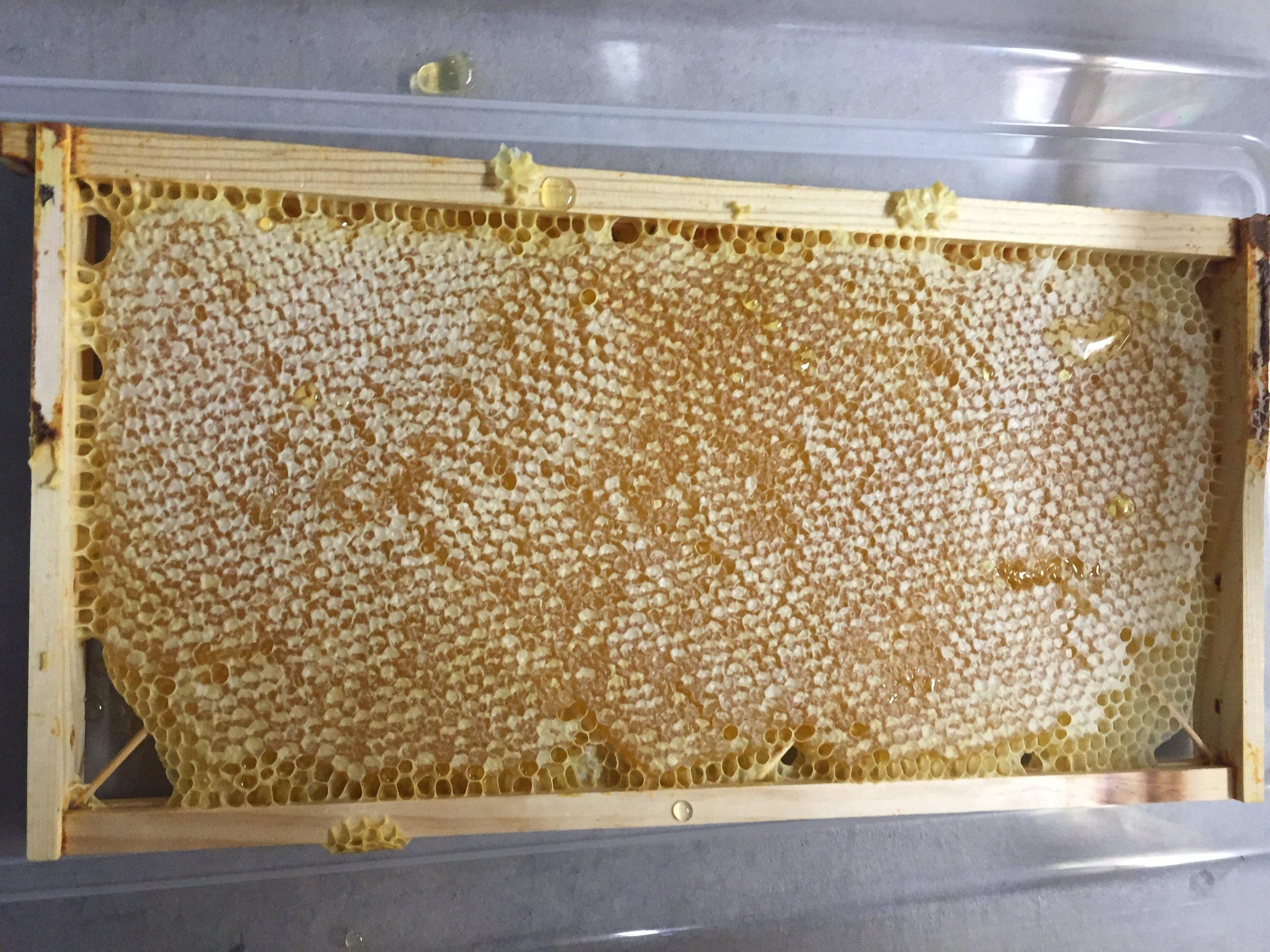 frame of honey.JPG
