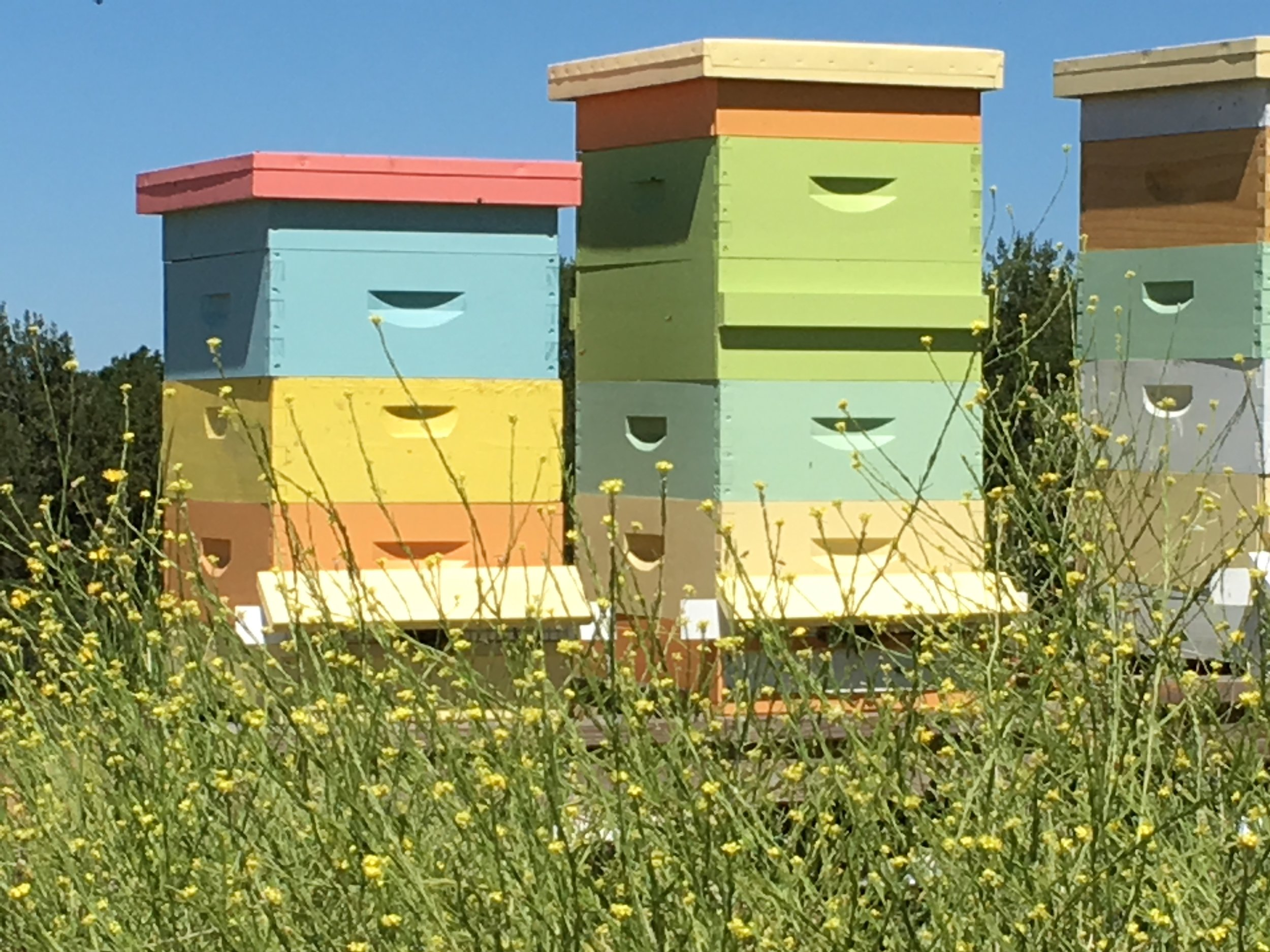 spring hives 2017.jpg