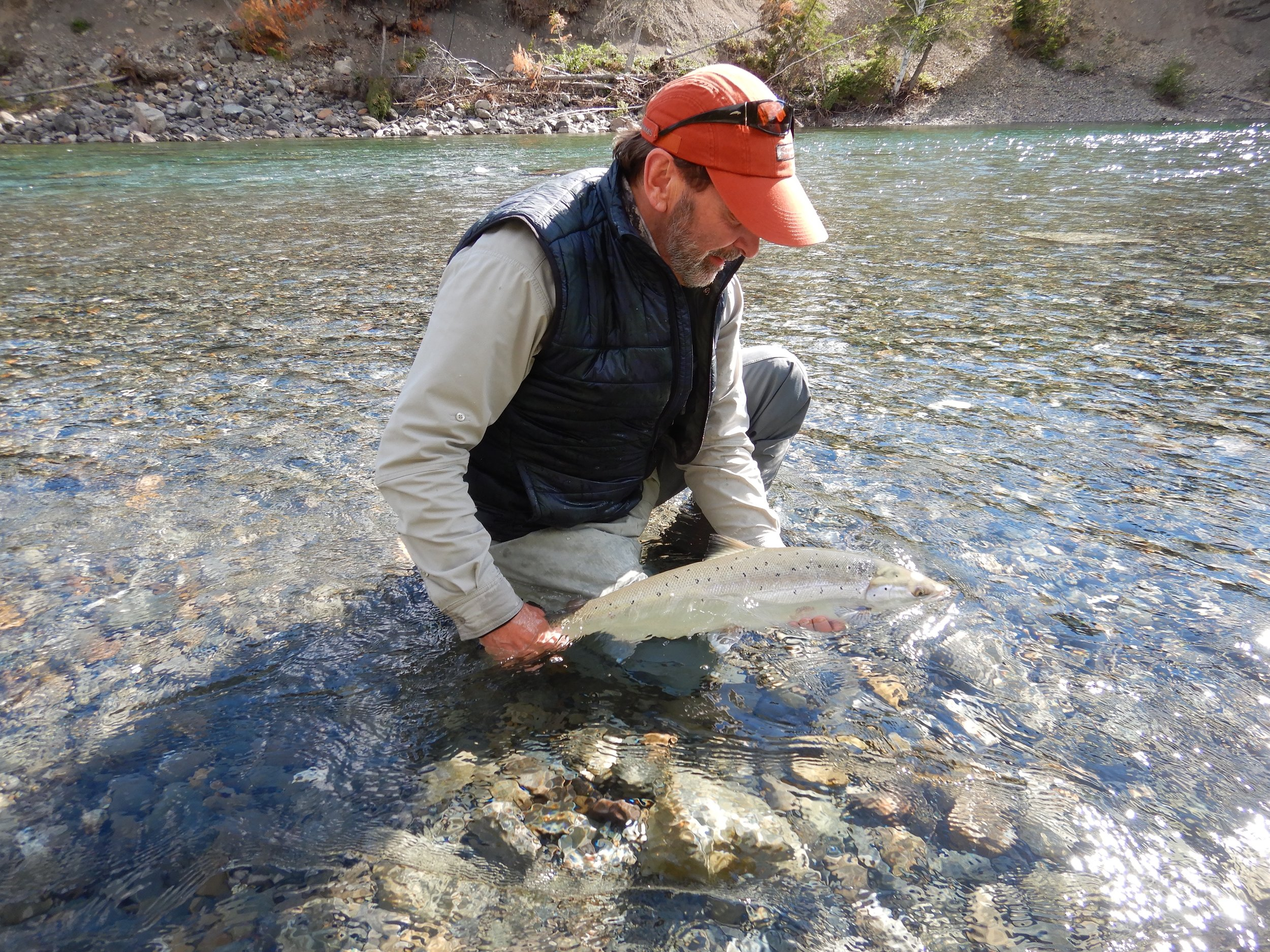 ASF director of Quebec operations Charles Cuisson releases a fine salmon on the Bonaventure. Well done Charles!