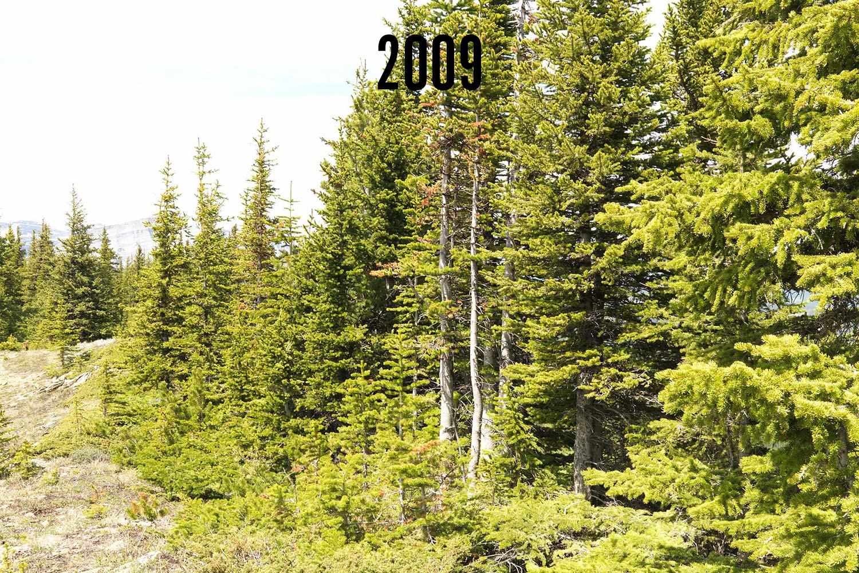 Repeat photograph taken near Plateau Mountain, Alberta by Mountain Legacy Project Researchers. Photo courtesy of the Mountain Legacy Project.