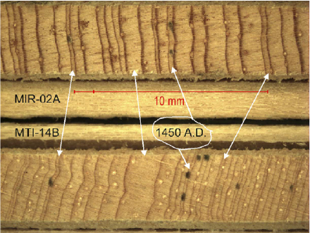 Example of the common growth pattern exhibited by two different tree species from the same region. This shared signal in tree rings in an area is the basis of crossdating. Arrows indicate growth rings that are known to have occurred on the same year. Photo from    Biondi et al. (2011)   .
