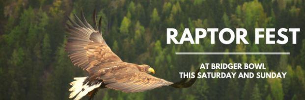 Raptor Fest.JPG