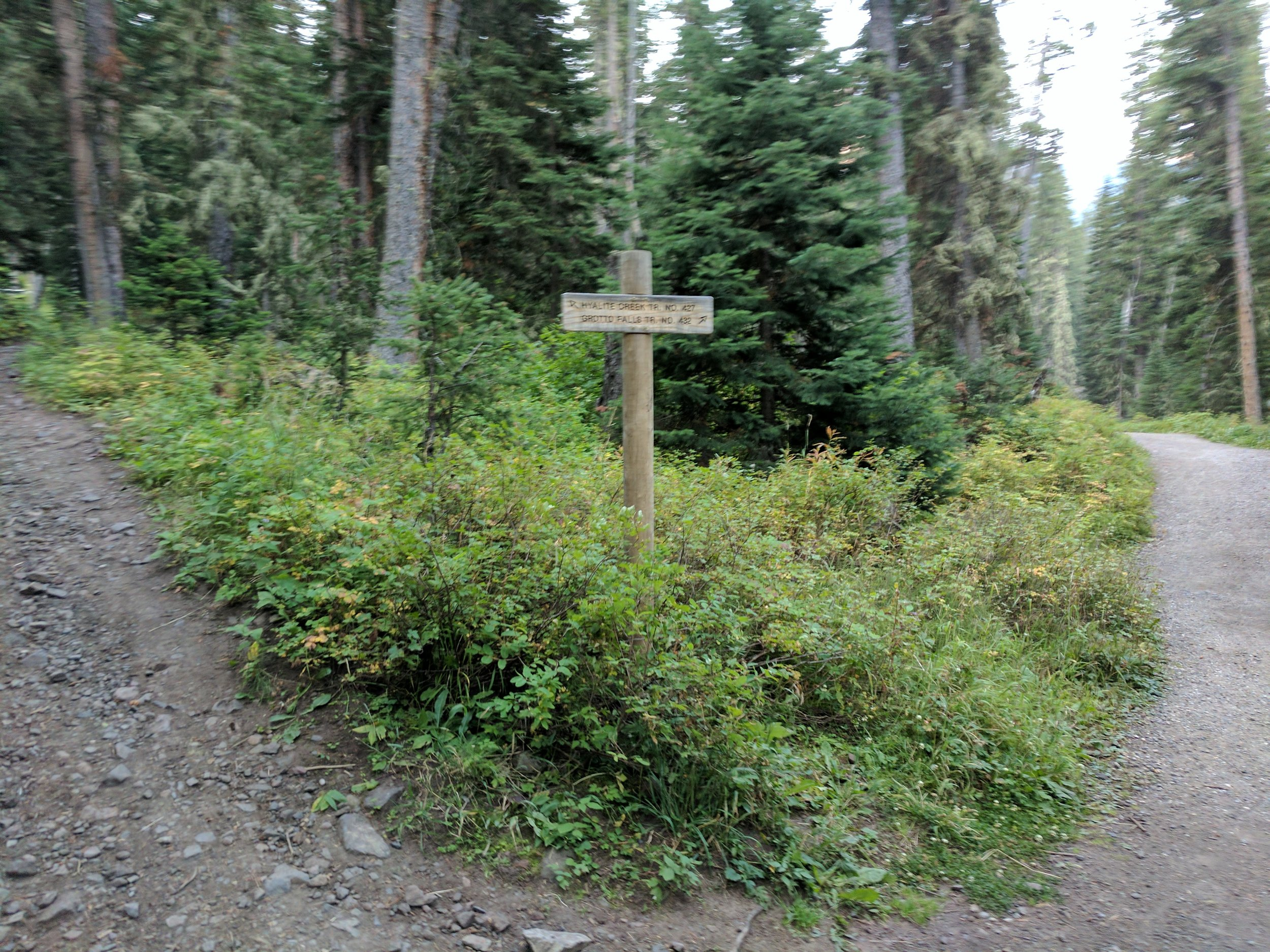 One of the splits between Hyalite and Grotto trails