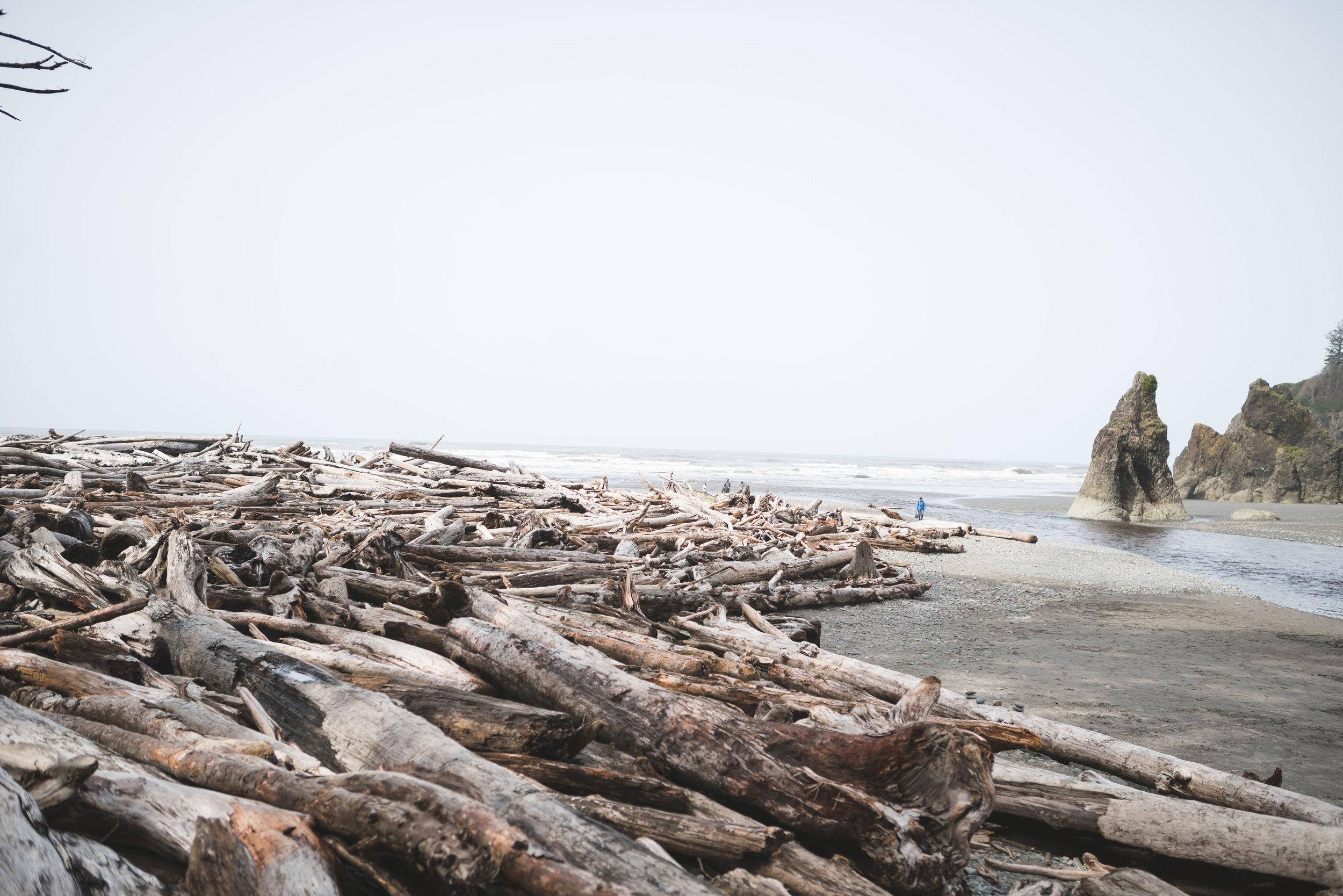 Olympic National Park Beach Logs Coast Oregon Road Trip Colorado to Alaska