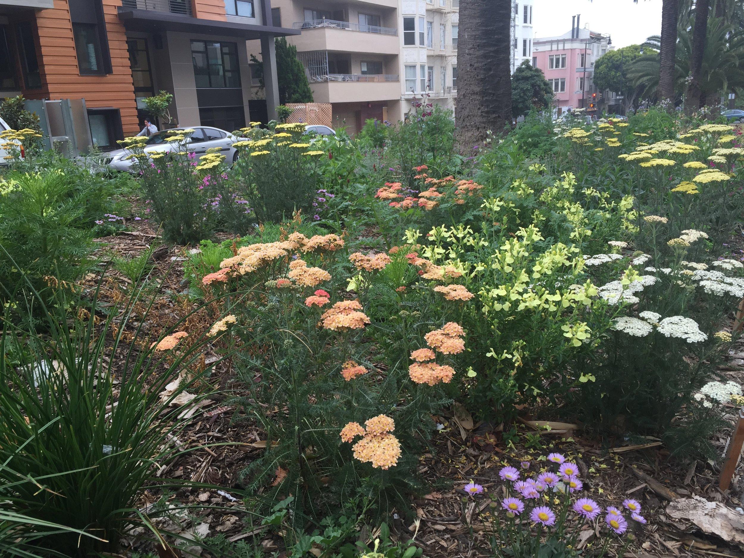 160602 - Garden2.jpg