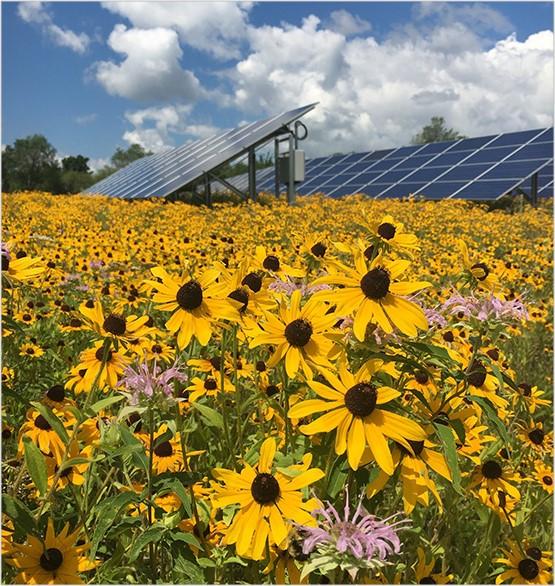 solar and pollinators.jpg