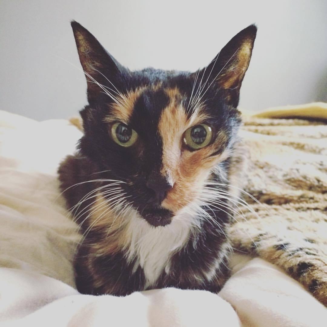 #soulmates #positivevibes #nunezphotography #cats #calico #tourtie #love