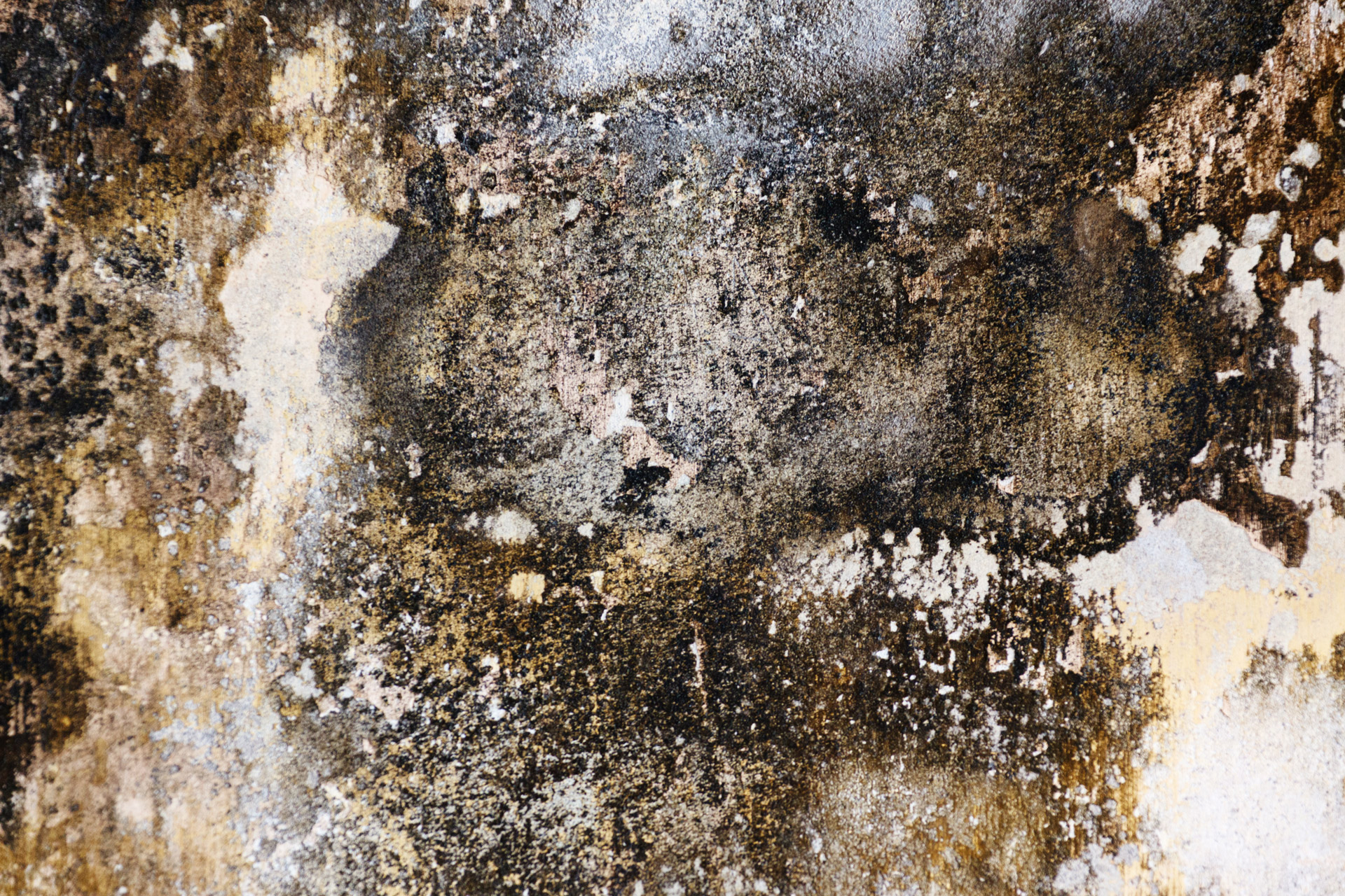 - Mold remediation is simply removing mold & mold sources from all affected surfaces/areas in your home or commercial structure. Mold can grow indoors on wet or damp surfaces, such as wallpaper, ceiling tiles, carpets, insulation material, wood and drywall. It can start to grow within 48 hours and if left unchecked, can have serious impacts on both your quality of life and your home's physical structure.If you see signs of mold or suspect that it has infected your home, we're here to help remediate the problem and prevent long-term damage.