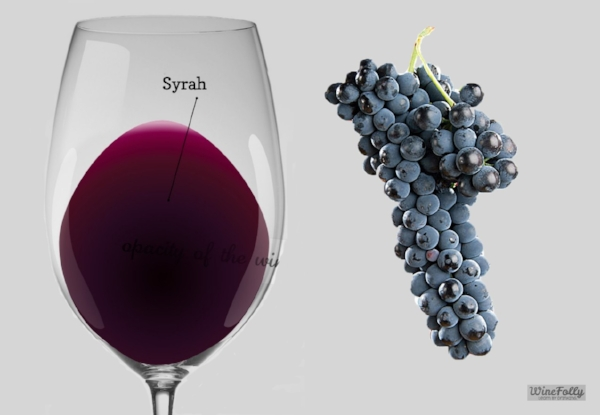 Syrah glass and grapes.jpg
