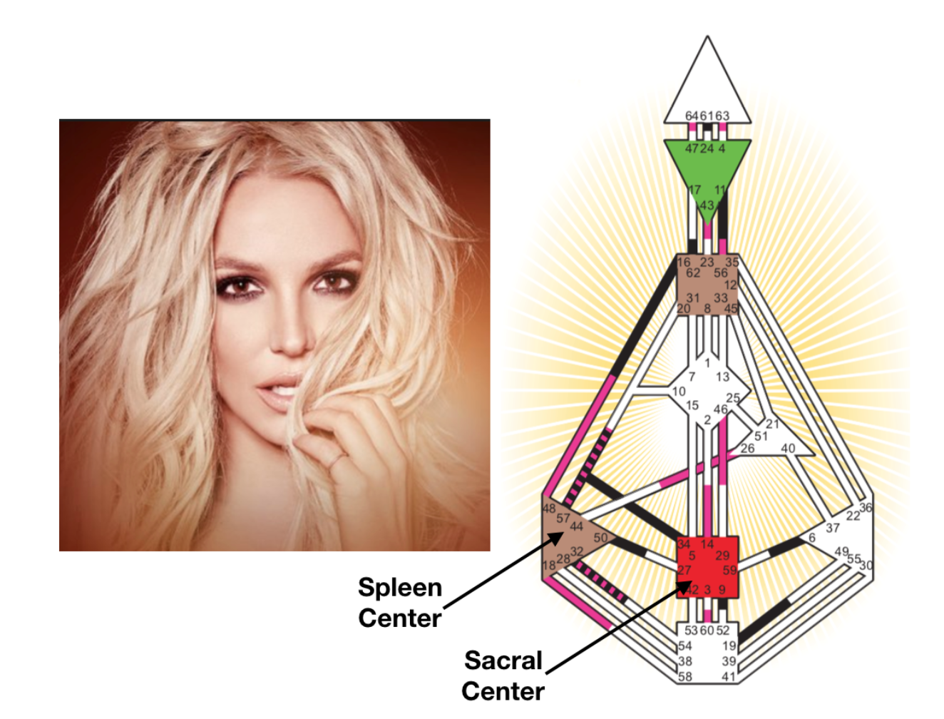 Britney Spears has both a defined (closed) Spleen Center and a defined (closed) Sacral Center.