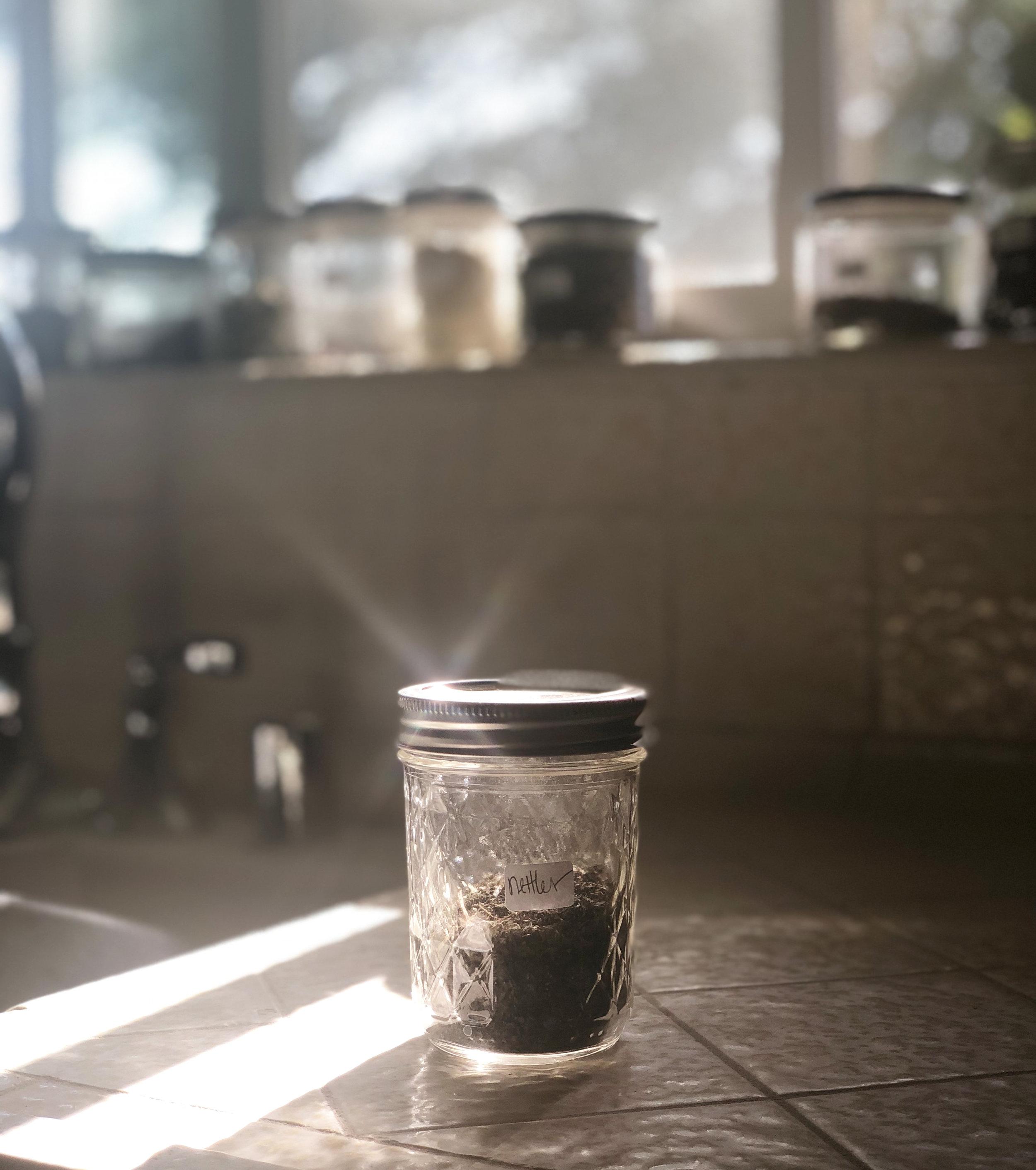 nettles-herb-for-clear-skin.jpg