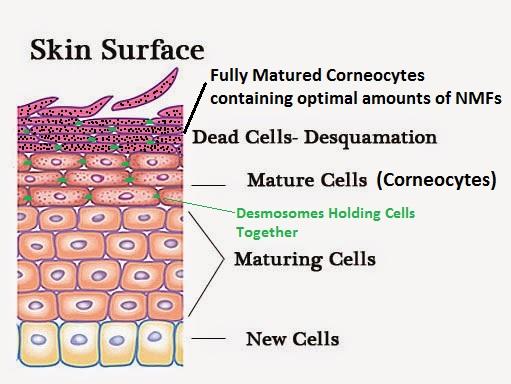 how-the-skin-exfoliates-itself.jpg