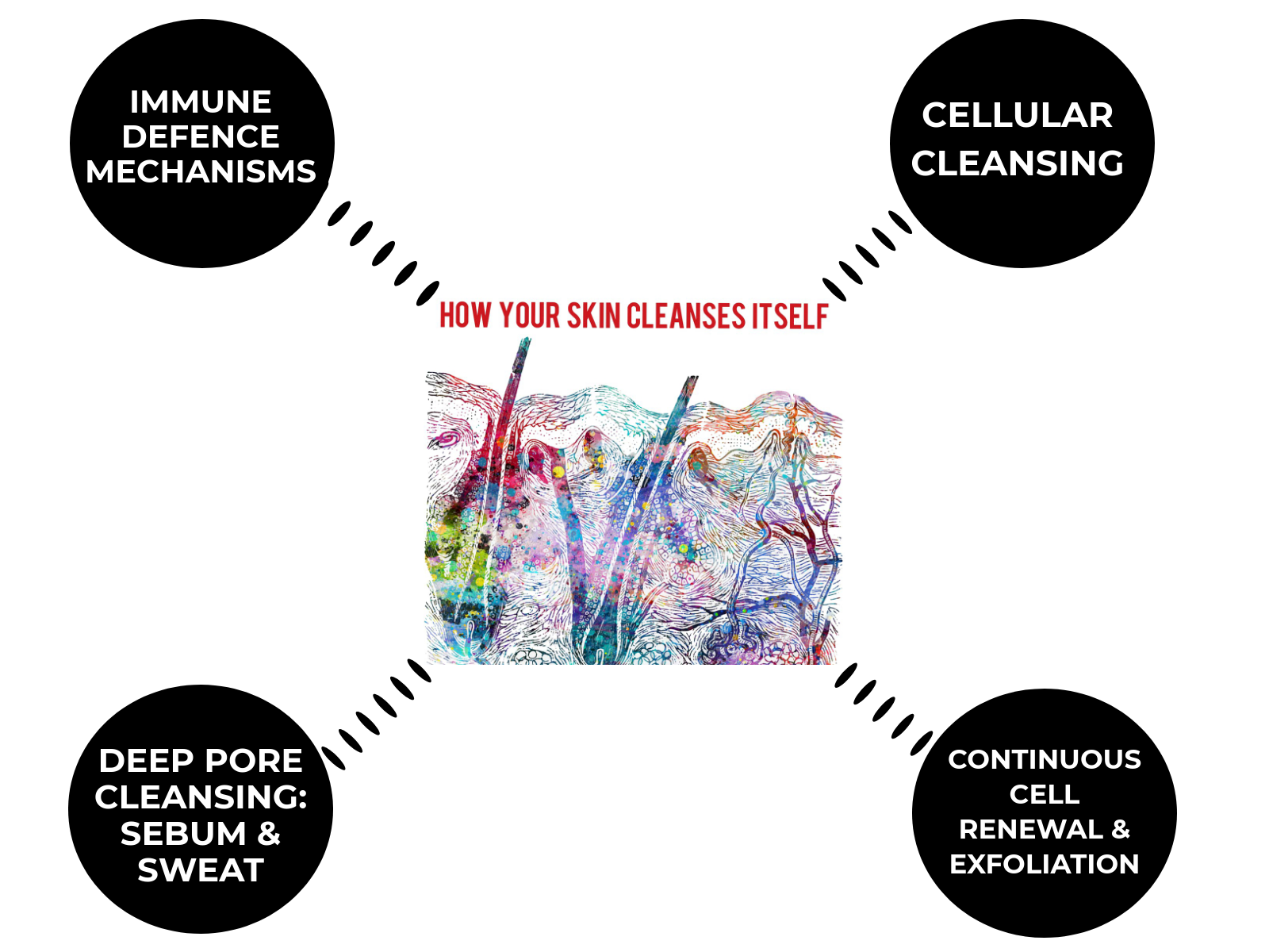 how-the-skin-cleanses-itself.png