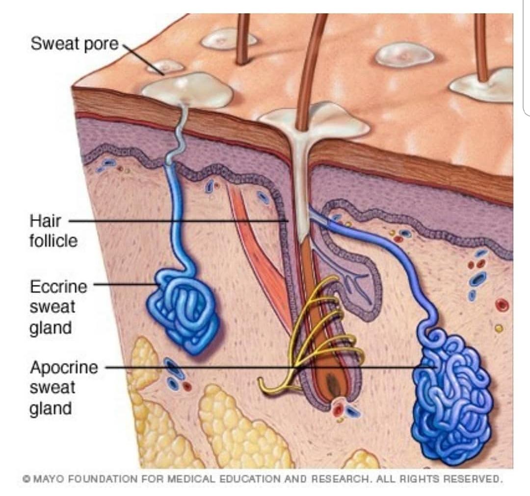 sweat-and-skincare.jpg